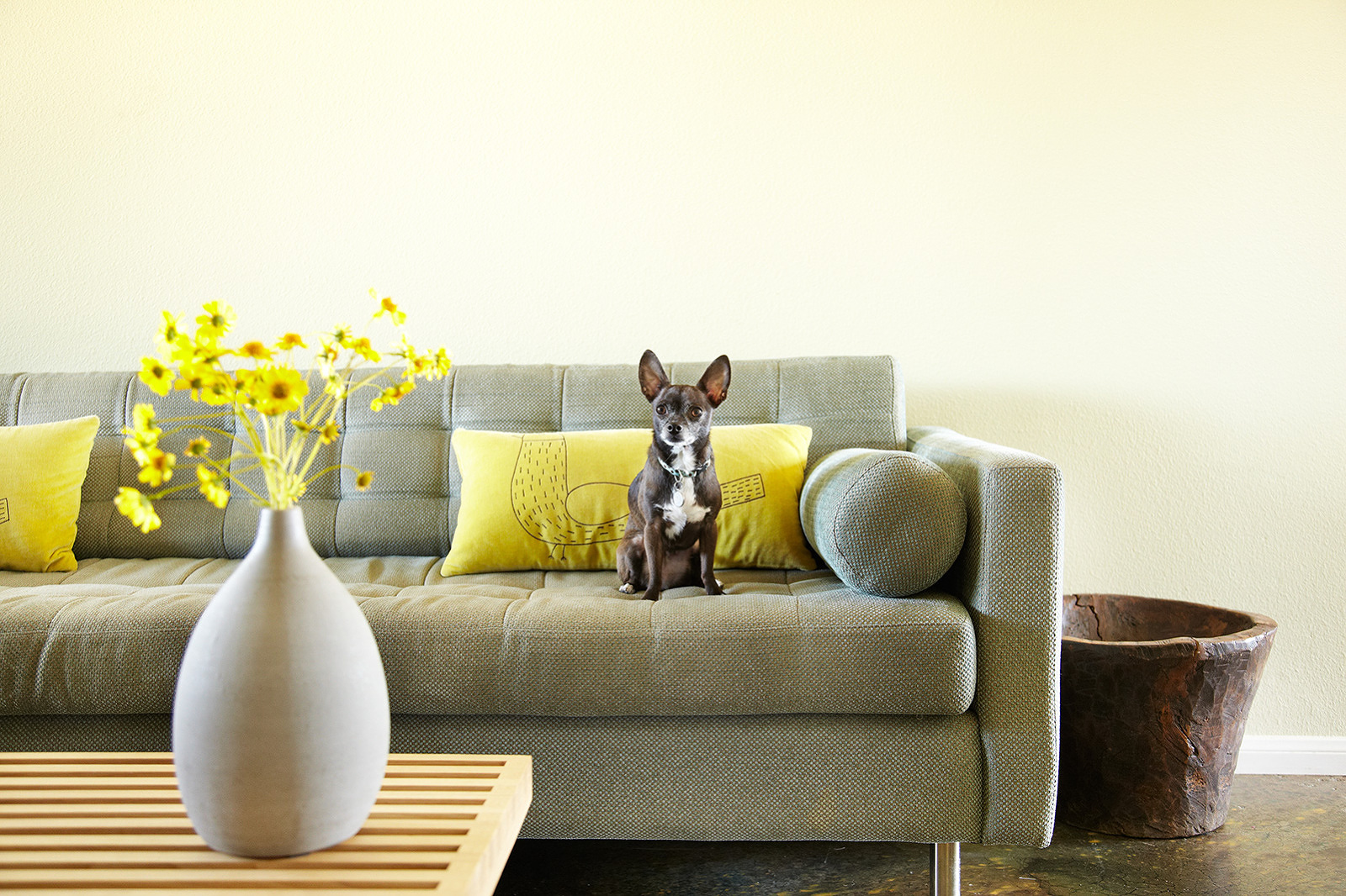 Dog on sofa  | Trinette+Chris Photographers