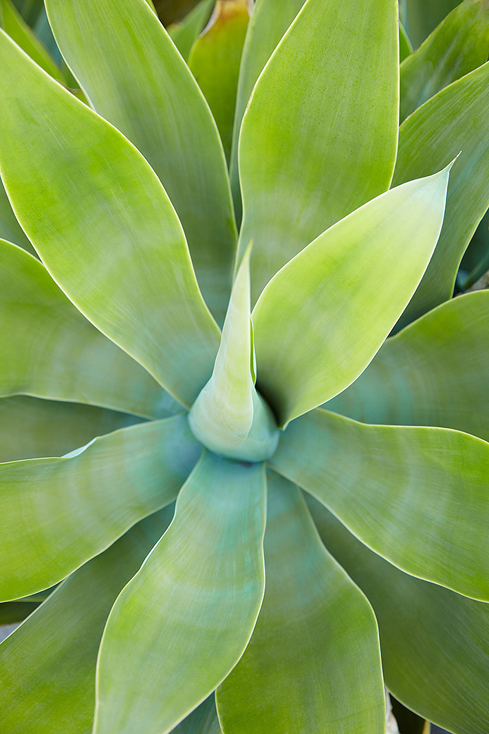 Succulent plant  | Trinette+Chris Photographers