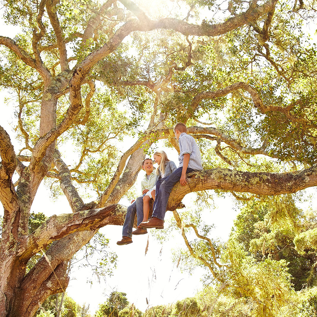 Kids in tree in Point Reyes, CA  | Trinette+Chris Photographers