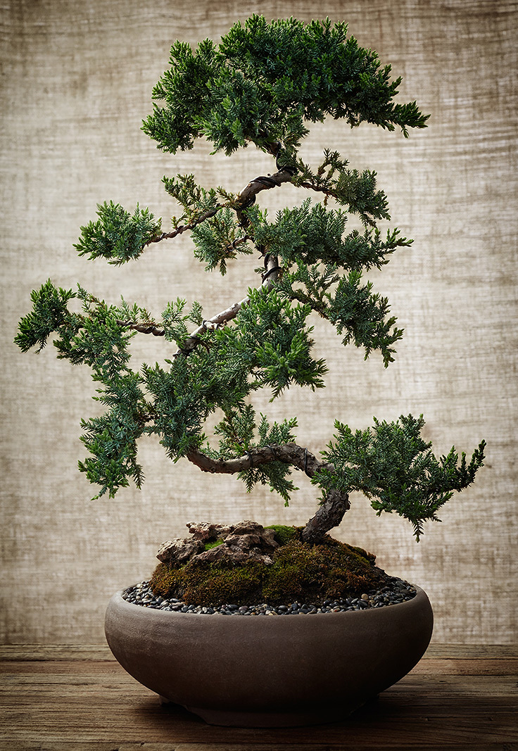 Bonsai Tree  | Trinette+Chris Photographers